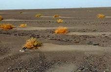 کشف یک جاده سنگ فرش از زیر خاک در جنوب شرقی ایران