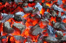 گوسالهای که زغال را با غذا اشتباه گرفت!