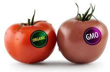 فرق محصولات ارگانیک با تراریخته