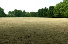 تغییر رنگ پارکهای لندن از سبز به قهوهای بر اثر گرمای تابستان