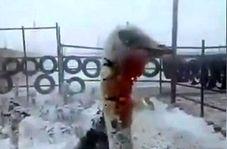 یخ زدن شترمرغها در اثر سرمای شدید افغانستان!