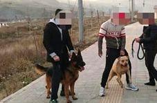 صحبت های دردناک پدر دختر بچه ای که مورد حمله دو سگ قرار گرفت