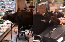 حمله گاوها به سوپرمارکتی در هنگ کنگ !