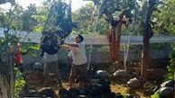نوادگان لاکپشتی که منقرض شده