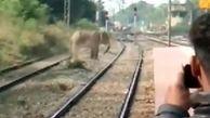 فیل وحشتزده سبب تخریب روستا شد