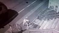 حملهی یک گربه به ۵ سگ غول پیکر!
