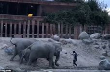 خوششانسی محض گردشگر هنگام حمله فیلها!