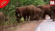 تشییع جنازه باورنکردنی گله فیلها برای یک بچه فیل!