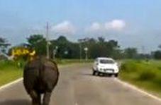 جولان کرگدن در جادههای هند