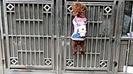 روش هوشمندانه سگ برای باز کردن درب