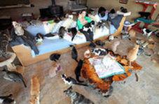 زندگی یک زن با ۲۰۰ گربه