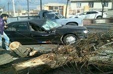 حرکت درخت ها بر اثر طوفان شدید در مشگین شهر