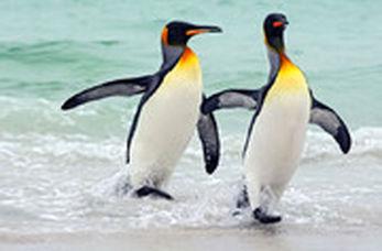 کرونا دنیا را به کام پنگوئنهای شیکاگو کرده!