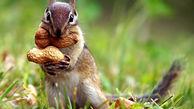 گربه ای که از چهار سنجاب سرپرستی میکند