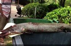 حمله ماهی غول پیکر درنده به دختر خردسال در پارک!