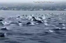 مسابقه دلفینها با جت اسکی + فیلم