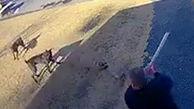 حمله سگهای وحشی به یک شهروند آمریکایی + فیلم