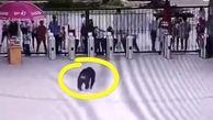 ضربه فنی کارگر باغ وحش توسط شامپانزه رزمی کار!