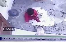حس مادرانه گربهای که مانع سقوط نوزاد از پله شد