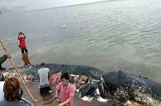 مرگ نهنگی که ۶ کیلو پلاستیک خورد!