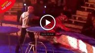 توقف اجرای نمایش سیرک به علت بدحال شدن ببر!