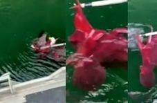 نجات عقاب سر سفید از دست اختاپوس