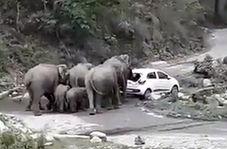 حمله فیلهای عصبانی به ماشینهای پارک شده در پارک ملی