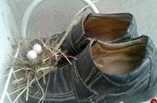 ماجرای جالب پرندهایی که پسری را مجبور کردند تا پایش در کفش پدر بگذارد