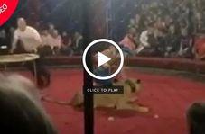 حمله ناگهانی شیر به دختر ۴ ساله در سیرک!