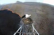 تصاویر منحصر به فرد نجات لانه لک لک از آتش سوزی