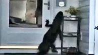 تلاش عجیب تمساح برای زدن زنگ در خانه