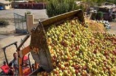 دپوی سیب درختی در کنارجادههای مهاباد
