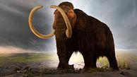 کشف بقایای ماموت ۱۵ هزار ساله در مکزیک