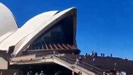 فیلم/ یک پیام حیاتی در آسمان سیدنی، ببینید!