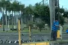 شکار عجیب کبوترها در وسط خیابان
