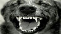 تلاش یک مادر برای نجات فرزندش از زیر دندانهای سگ ولگرد