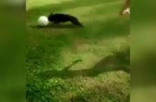 تکنیک یک سگ بهتر از لیونل مسی