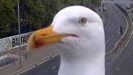 پرندهای که با دیدن دوربین حس بازیگری پیدا کرد