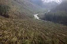 طوفان در ایتالیا میلیونها درخت را از ریشه درآورد + فیلم