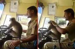 رانندگی میمون با اتوبوس سر و صدا بپا کرد!