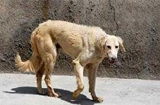نجات یک مرد از دندانهای سگ ولگرد + فیلم