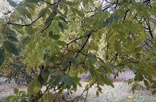 ترنم باران پاییزی در طبیعت بینظیر «اسلام آبادعلیا»