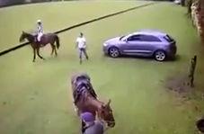 بیهوشی یک مرد از جفتک ناگهانی اسب