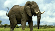 رفتار جالب فیل حامی طبیعت در مواجهه با زباله