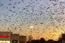صحنه وحشتناک هجوم پرندگان به فروشگاه!