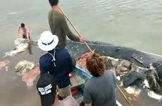 پلاستیکها جان یک نهنگ را گرفتند
