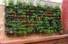 باغچه عمودی برای خانههایی با فضای کم