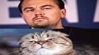 تصاویر گربهای که لقب دیکاپریو به خود گرفته است