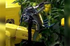 برداشت حرفهای محصولات کشاورزی با رباتی قدرتمند