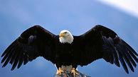 تلف شدن پرندههای شکاری پس از خوردن لاشه مرغهای فاسد